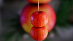 Big brother is watching you (BeMo52) Tags: apfel apple flora fruit macro macromondays makro malus mirror natur nature spiegel vokal vowel zierapfel ornamentalapple