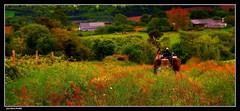 Retour des Champs..... (faurejm29) Tags: faurejm29 canon campagne sigma paysage nature