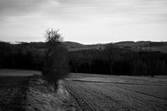 Raumteiler (richard.kralicek.wien) Tags: blackandwhite landscape austria waldviertel winter