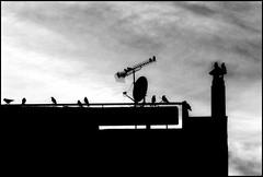 * (PattyK.) Tags: snapseed nikond3100 ioannina giannena giannina epirus ipiros balkans hellas ellada greece grecia griechenland whereilive 2018 autumn november νοέμβριοσ ιωάννινα γιάννενα ελλάδα ήπειροσ βαλκάνια ηπόλημου πουλιά birds monochrome blackandwhite urban urbanwildlife sky inthecity αστικόσ πόλη city citycenter