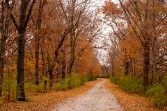 Fall Drive (jrobfoto.com) Tags: apsc autumn fall fuji illinois leaves raw road xpro2 xtrans