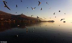 November dance (borisnaumoski) Tags: ohrid macedonia lake birds calm autumn november nature boat water