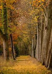 Forest walk (katrinchen59) Tags: forest forestphotography autumnforest autumncolors fall autumnseason nature naturephotography trees waldspaziergang wald herbstwald herbstfarben herbstlaub herbstlich natur naturfotografie bäume bos boswandeling herfstbos herfstkleuren natuur natuurfotography bomen