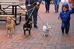 Out for a Walk (Mondmann) Tags: dogs child toddler boy kid canines pets animals easternmarket sidewalk street streetphotography washingtondc walking strolling dogwalking usa unitedstates america mondmann fujifilmxt20