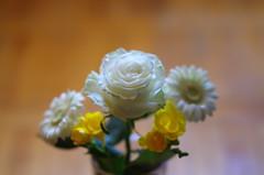 Pure white (Baubec Izzet) Tags: baubecizzet pentax bokeh flower bouquet nature