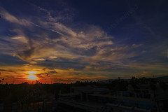 05 (morgan@morgangenser.com) Tags: sunset pretty beautiful red orange colorful evening dusk clouds blue palmtree santamonicacollege smc silhouette sun yellow cool