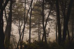 -Boira a l'Extremera. (ec.thor) Tags: boira niebla fog canon eos80d 80d nautre rainy mountain