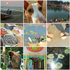gokarna2 (belight7) Tags: allgokarna gokarna india mosaic hanuman langur monkey collage