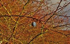 blackthorn (kadege59) Tags: nature natur canonpowershotsx230hs canon winter albrechts suhl sky wow wonderfulnature great greatphotographers kadege59 kadegephoto supi