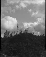 storms coming on 4x5 film (Garrett Meyers) Tags: graflexseriesd4x5 garrettmeyers largeformat filmphotographer film graflex graflex4x5 blackandwhitefilm homedeveloped northerncalifornia clouds cloudscape forest storm