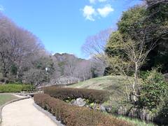19o1511 (kimagurenote) Tags: tree 東高根森林公園 higashitakane forest park 川崎市宮前区 miyamaekawasaki