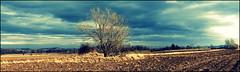 Wiosenny widok. (andrzejskałuba) Tags: poland polska pieszyce plant panasonicdmcfz200 lumix roślina drzewa drzewo tree trees trawa grass natura nature natural natureshot natureworld niebieski niebo sky color clouds chmury view white widok beautiful biały yellow żółty pole field fields spring wiosna góry górysowie mountainsofowls mountains panorama 1000v40f