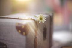 Finding Treasure... (KissThePixel) Tags: light delight sunlight attic treasure chest treasurechest flower petals bokeh smoothandsilky macro 50mm nikondf 12 f12 nikon findingtreasure january loft roofspace magic longacremanor stilllifephotography