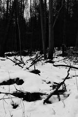 Winter (kotmariusz) Tags: snow winter poland nature landscape trees cold śnieg zima las bw blackandwhite monochrome krajobraz tree snowy monochrom monochromatic canon efs24mmstm