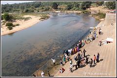 8474 - River Tunga near Sringeri Mutt (chandrasekaran a 55 lakhs views Thanks to all.) Tags: tunga rivertunga river sringeri mutt fishes karnataka india feeding canoneos6dmarkii tamronef28300mm