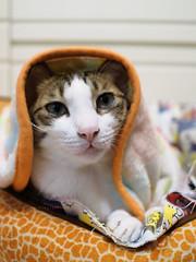 Jim (Steve only) Tags: olympus pen ep5 mzuiko digital 17mm 118 f18 1718 cats jim