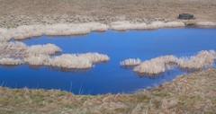 Blue Lagoon (Julian Barker) Tags: holy island lindisfarne northumberland north east england uk great britain blue lagoon coast grass sky reflection canon dslr julian barker