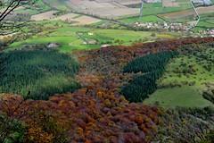 Lengua de otoño. (Howard P. Kepa) Tags: castillaleon paisvasco saltodelnervion delika otoño bosque pueblo montesantiago sierrasalvada campos arbolesperennes arbolescaducifolios
