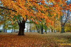 Autumn leaves (Piotr Tylski) Tags: fujifilm xe1 fuji poland polska landscape vacations nature art europe travel macphun luminar skylum fujixcamera fujixseries fujix mirrorless