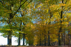 Wouwse Plantage (Jan Bogers) Tags: wouwseplantage janbogers d800 wouw herfst automne nederland paysbas netherlands brabant westbrabant west dreef beukenlaan beuk geel arbre voie hêtre beukenboom forêt soleil goud gold sun or dor tree forest plantage wouwse brabantsewal