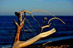 sunset (maurizio.s.) Tags: mare sea beach water wood light sunset outdoor nature tree sun blu landscape seascape nikon 80200 tramonto legno radice