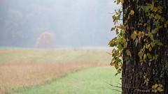 The Tree of Life (stevenpng) Tags: symbolismofthetree fallfoliage awalkintothefallcolors rainsatsmokymountains smokymountainsnationalpark americannationalpark greatsmokymountainsnp fallcolors d810 nikoncapturenx2