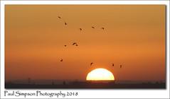 Sunset and birds (Paul Simpson Photography) Tags: sunset evening birds sonya77 paulsimpsonphotography imagesof imageof photoof photosof weather november autumn birdsinflight lincolnshire sky england scunthorpe