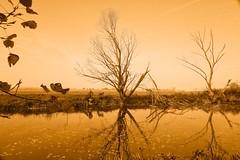 Kingbeek, Schipperskerk (NL) (Trampelman) Tags: autumn herfst leicaq limburg nature natuur nederland netherlands niksoftware nl trampelman monochrome