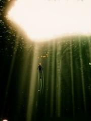 To the Light [Alt.] (xXSamirXx) Tags: abzû abzu giantsquid 505games ue4 unrealengine4 reshade reshadeframework