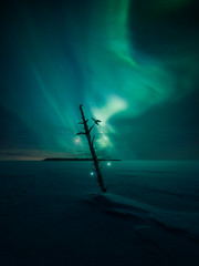Lovers in the wilderness (petrisalonen) Tags: christmas joulu north northernlights auroras auroraborealis light white green snow ice frozen landscape night nightphotography astrophotography fin finland suomi nature hawks stars space photoshop home shadows tree sky clouds bird bulb