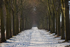 shades of winter (JoannaRB2009) Tags: winter path alley avenue tree trees lindenalley snow nature calden hesse hessen wilhelsthal germany deutschland