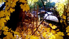 Neighbor's fence -HFF (Maenette1) Tags: neighbors fence autumn leaves trees menominee uppermichigan happyfencefriday flicker365 allthingsmichigan absolutemichigan projectmichigan autumninmichigan