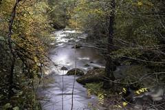 IMGP1679 (petercan2008) Tags: río river hood bosque agua water arbol tree leave hoja caída fall otoño autum saha cantabria españa spain