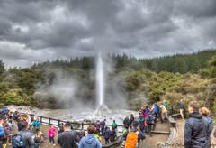 Lady Knox Geyser at Rotorua (myshutterworld) Tags: rotorua north island newzealand waiotapu landscape hdr panoramic hot springs geothermal thermal trees lady knox geyser sulphur