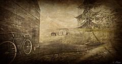 Junk III (Loegan Magic) Tags: secondlife bike bicycle car auto wreck junk shovel pitchfork grass path house backyard trees yard vintage monochrome sepia blackandwhite