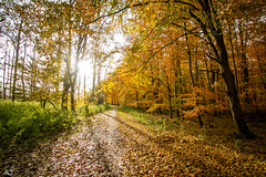 Herfst in het Hollandse Hout