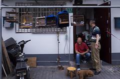 Nameless (Spontaneousnap) Tags: spontaneousnap street shanghai china city like candid documentary people publicareas lifestyle 上海 ricohgr takeabreak afternoon asia pet bird dog smile littledoglaughedstories