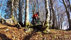Tree Slalom (29in.CH) Tags: fall autumn fatbike ride 16112018