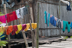 Asmat laundry day (10b travelling / Carsten ten Brink) Tags: carstentenbrink 2018 arafrura arafurasea asia asiapacific asian asie asien asmat asmatregency azmat clickheretoaddkeywords iptcbasic indonesia indonesian indonesien irianjaya pacific pacificocean papoea papouasie papua papuaprovince papuan southpapua uwus westpapua clothes clothesline cmtb drying ethnicgroup headhunting kampung laundry mangroveswamp rainforest swamp tenbrink village woodcarvers woodcarving