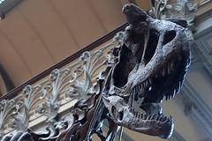 Muséum d'Histoire Naturelle (Philippe_28) Tags: muséum histoire naturelle galerie paléontologie france europe