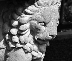Lion face (maytag97) Tags: theoregongarden maytag97 nikon d750 lion face figure figurine outdoor outside sunlit sunlight white cement cast shadow contrast texture closeup stone background head sculpture beautiful design king pattern symbol old decorative animal culture statue nose abstract art decoration object creative detail blackandwhite bw