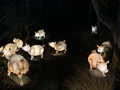 Chinese lanterns round 2 (Barry Carthy) Tags: burnssupper night giant chinese lanterns edinburghzoo zoo edinburgh scotland haggis