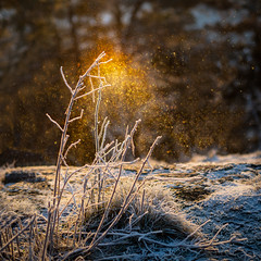 Frozen fairy dust (Tore Thiis Fjeld) Tags: norway oslo november icecrystals backlight ice frozen sunlight square nikon sigma50mmf14dghsmart