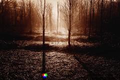 Il sole splende per tutti #Esplora# (Gianni Armano) Tags: il sole splende per tutti foto gianni armano photo alessandria piemonte italia flickr monferrato