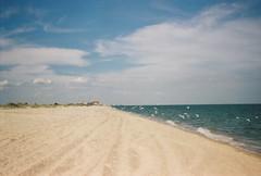 (dariadavydova) Tags: film analog filmphoto analogphoto filmisnotdead sea odessa ukraine empty emptybeach romance birds water sand fly move minimal blue sky clouds