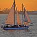 Shearwater Sailboat Upper Bay New York City NY P00039 DSC_1704
