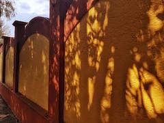 Aquel que planta un árbol, no siempre disfrutará de su sombra. (Refrán) (FOTOS PARA PASAR EL RATO) Tags: cdmx calle muros pared naranja texturas sombras tarde