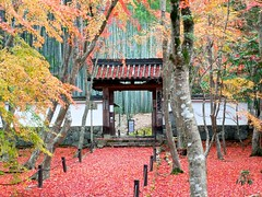 Bamboo Temple (tez-guitar) Tags: temple kyoto autumn 紅葉 autumn leaves wood forest tree trees bamboo maple gate huawei leica