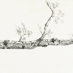 Study of a tree (1816) by Jean Bernard (1775-1883). Original from The Rijksmuseum. Digitally enhanced by rawpixel. thumbnail