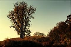 Herbsttraum (linke64) Tags: thüringen deutschland germany natur landschaft bäume blätter himmel hügel herbst jahreszeiten rahmen gegenlicht gebüsch busch büsche
